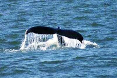 New Jersey Whale Watching
