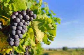 Wine festivals and events