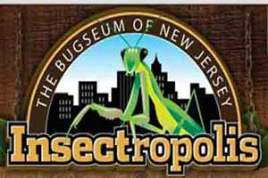 Insectropolis, NJ