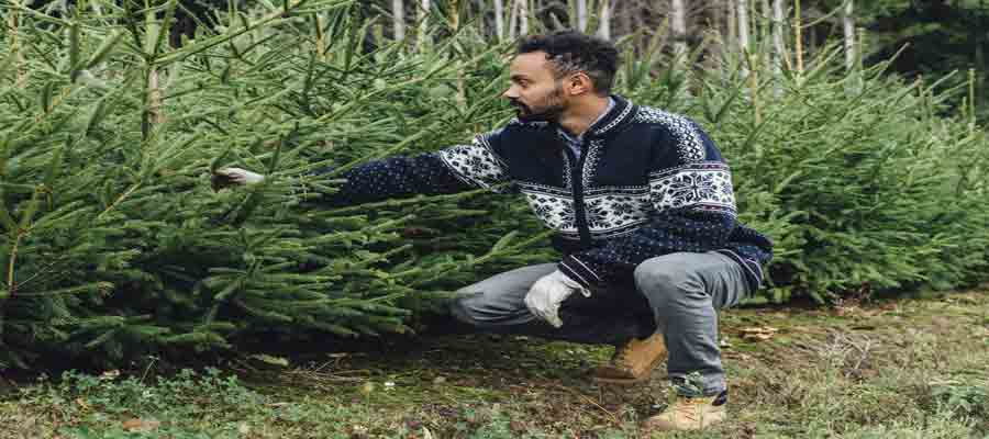 Christmas Tree Farms in NJ