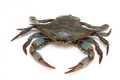 Best Crabbing in New Jersey