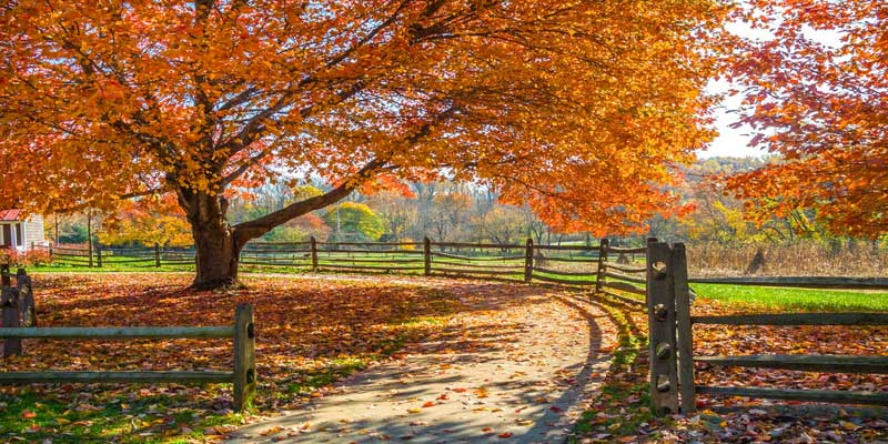 Best New Jersey Fall Activities, Festivals, and Events