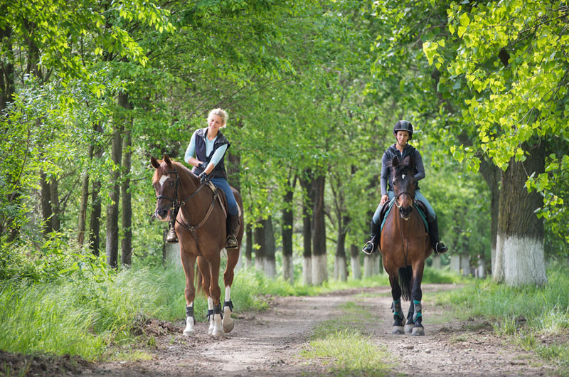 New Jersey Horseback Riding Trails