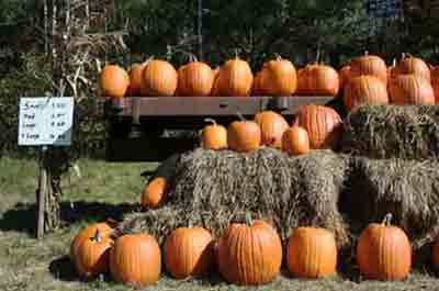 Pumpkin Picking Farms