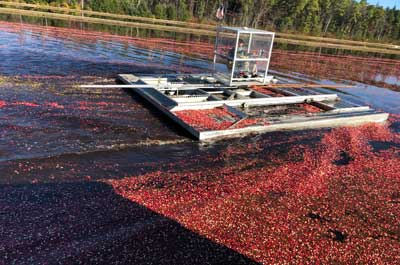 Cranberry Harvest Tour