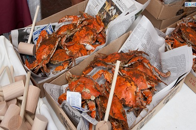 Cape May Craft Beer, Music & Crab Festival