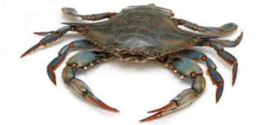 Best Crabbing Places in New Jersey