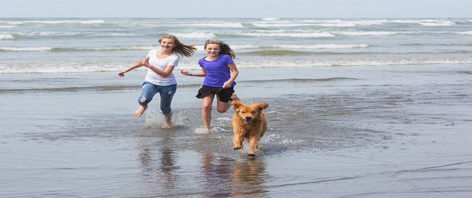 New Jersey Dog Friendly Attractions