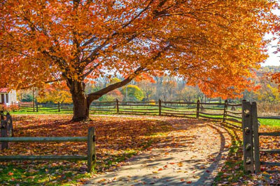 Best NJ Fall Things to do