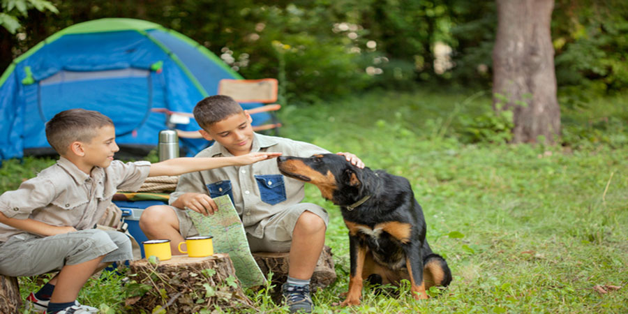 Pet Friendly Camping Sites in New Jersey