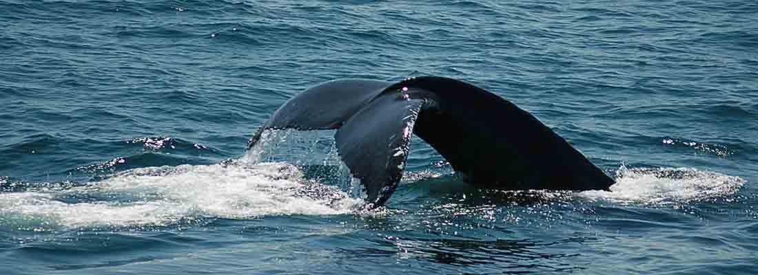 Dolphin and Whale Watching in New Jersey